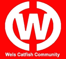 Wels Catfish Community